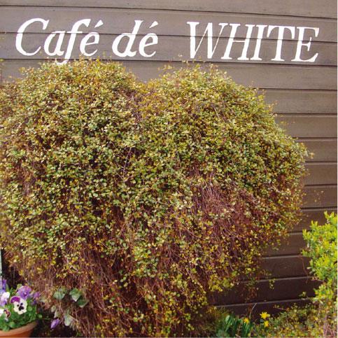 cafedewhite.jpg